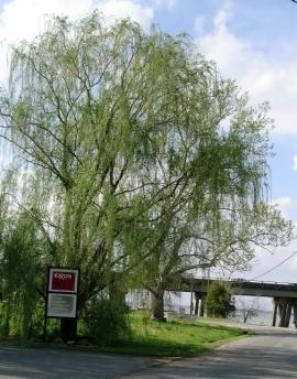 Exxon is Everywhere - Rappahannock River 3-07